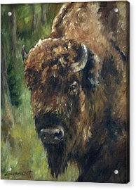 Bison Study - Zero Three Acrylic Print by Lori Brackett