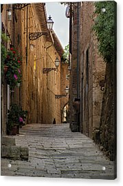 Black Alley Cat Acrylic Print
