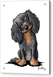 Black And Brown Ckc Spaniel Acrylic Print
