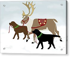 Black And Chocolate Labs Lead Reindeer Acrylic Print