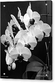 Black And White Beauty Acrylic Print by Ramona Matei