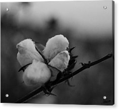 Black And White Boll Acrylic Print