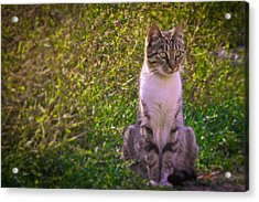 Black And White Cat In The Bush Acrylic Print