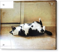 Acrylic Print featuring the photograph Black And White Cat Reclining by Jayne Wilson