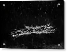 Black And White Dandelion Acrylic Print