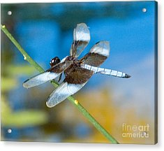Acrylic Print featuring the photograph Black And White Dragonfly by Mae Wertz