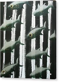 Black And White Fish Acrylic Print