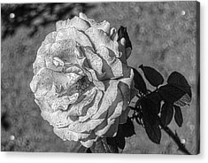 Black And White Flower #2 Acrylic Print
