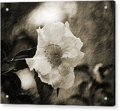 Black And White Flower With Texture Acrylic Print