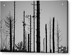 Black And White Forest 1 Acrylic Print