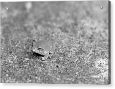 Black And White Frogger Acrylic Print