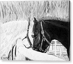 Black And White Horses Art Print Acrylic Print