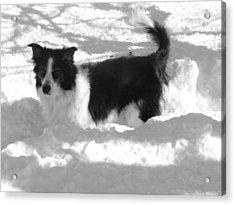 Acrylic Print featuring the photograph Black And White In The Snow by Michael Porchik