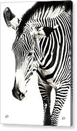 Black And White Acrylic Print by Jenny Rainbow