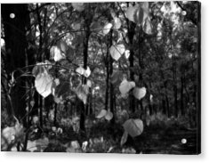 Black And White Leaves Acrylic Print