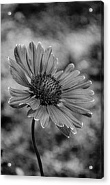 Black And White Love Acrylic Print