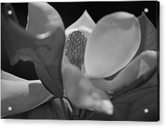 Black And White Magnolia Acrylic Print