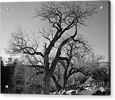 Acrylic Print featuring the photograph Black And White Oak by Janice Westerberg