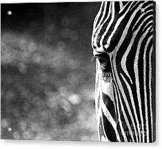 Black And White On Black And White Acrylic Print