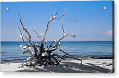 Acrylic Print featuring the photograph Black And White On Blue by Phil Abrams