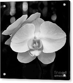 Black And White Orchid With Lights - Square Acrylic Print
