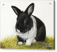 Black And White Pet Rabbit Acrylic Print