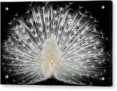 Black And White, Acrylic Print