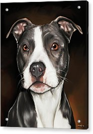 Black And White Pit Bull Terrier Acrylic Print