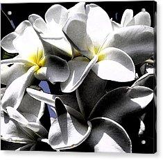 Black And White Plumeria Acrylic Print
