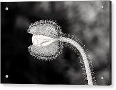 Black And White Poppy Acrylic Print
