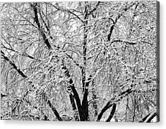 Black And White Snowy Tree Branches Abstract 2 Acrylic Print