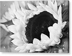 Black And White Sunflower Acrylic Print by Eden Baed