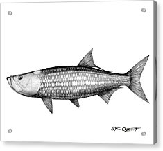 Acrylic Print featuring the drawing Black And White Tarpon by Steve Ozment