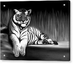 Black And White Tiger Acrylic Print by Xafira Mendonsa