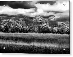 Black And White Trees Acrylic Print by Darryl Dalton