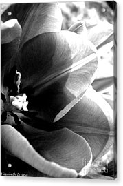 Black And White Tulip Acrylic Print by Elizabeth Fredette
