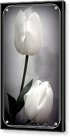 Black And White Tulips  Acrylic Print