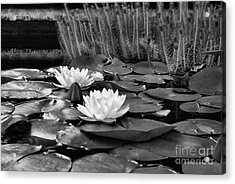 Black And White Version Acrylic Print