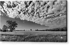 Black And White Wheat Field Acrylic Print