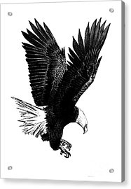 Black And White With Pen And Ink Drawing Of American Bald Eagle  Acrylic Print by Mario Perez