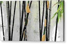 Black Bamboo #2 Sarasota Acrylic Print