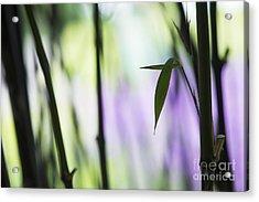 Black Bamboo Acrylic Print