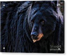 Black Bear Acrylic Print by Clare VanderVeen