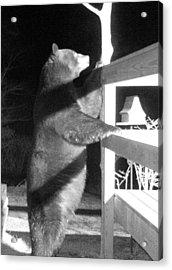 Black Bear Acrylic Print by Mim White