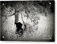 Black Bear Sitting Acrylic Print