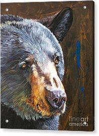 Black Bear The Messenger Acrylic Print