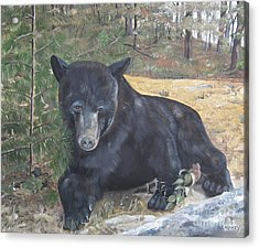 Acrylic Print featuring the painting Black Bear - Wildlife Art -scruffy by Jan Dappen