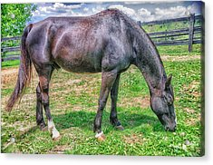 Acrylic Print featuring the photograph Black Beauty by Dennis Baswell