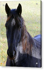 Black Beauty Acrylic Print