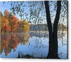 Black Birch Along Lake Bailee In Petit Acrylic Print